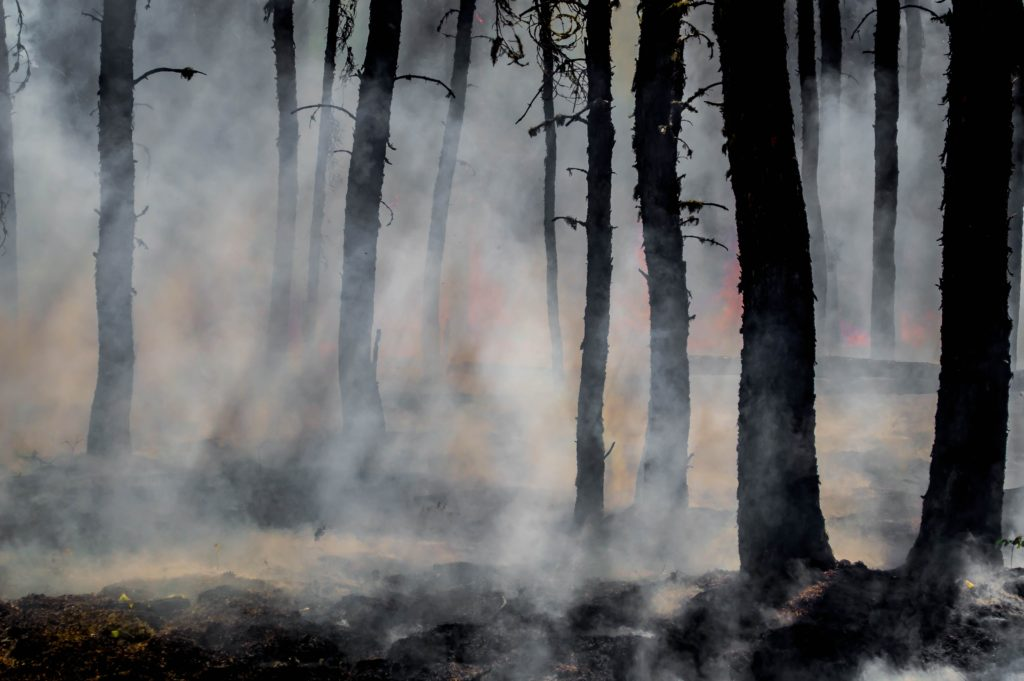 Image of a forest with trees blackened and the ground scorched. Smoke rises from the ground and flames are in the background.